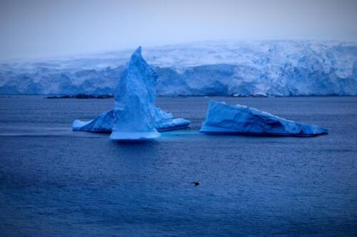 Айсберг, остров Ливингстън