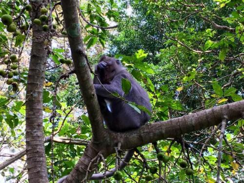"""""""Гората на маймуните"""", остров Бали, Индонезия"""